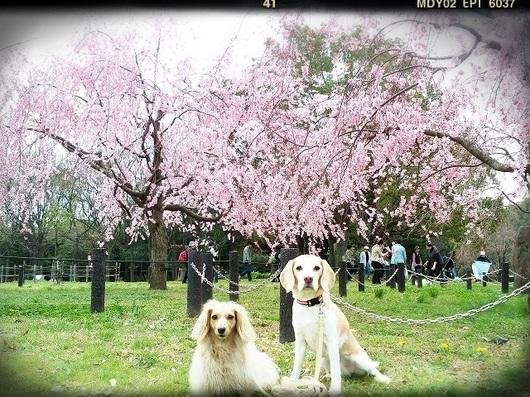 LINEcamera_share_2014-03-29-14-28-22.jpg